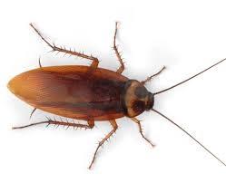 adana amerikan hamam böceği ilaçlama