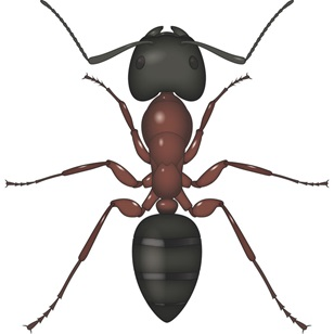 Adana Karınca İlaçlama
