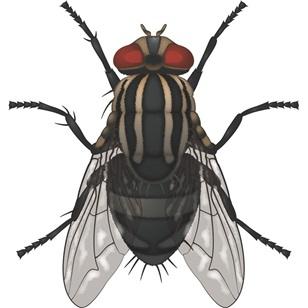 Adana sinek ilaçlama