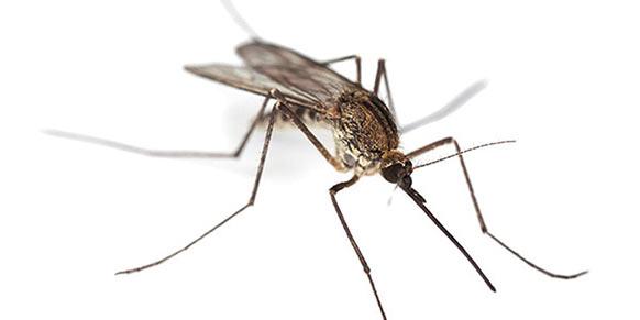 Adana sivrisinek ilaçlama