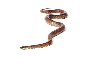 Adana yılan ilaçlama