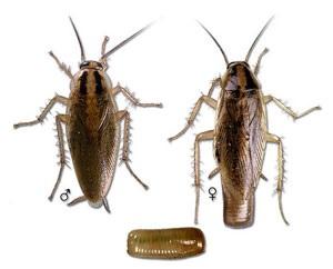 adana hamam böceği ilaçlama
